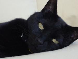Сьогодні — День захисту чорних котів