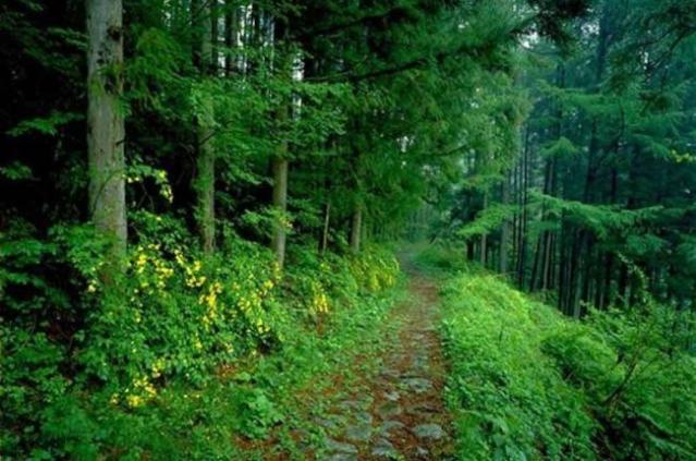 Німеччина допоможе Україні реформувати лісову галузь