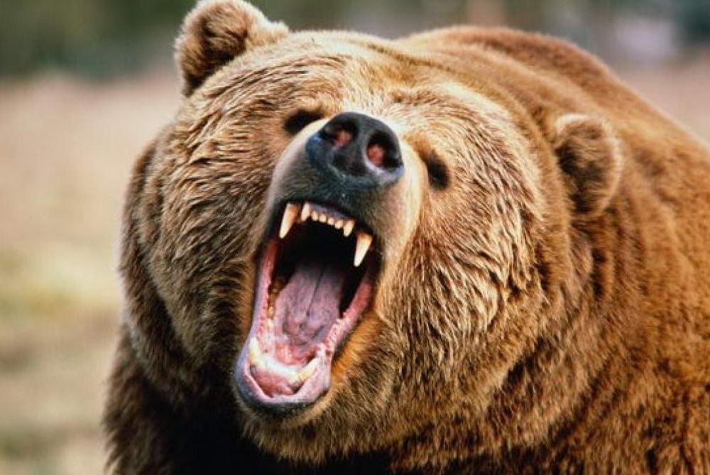 Собаку від ведмедя врятував зайвий жир