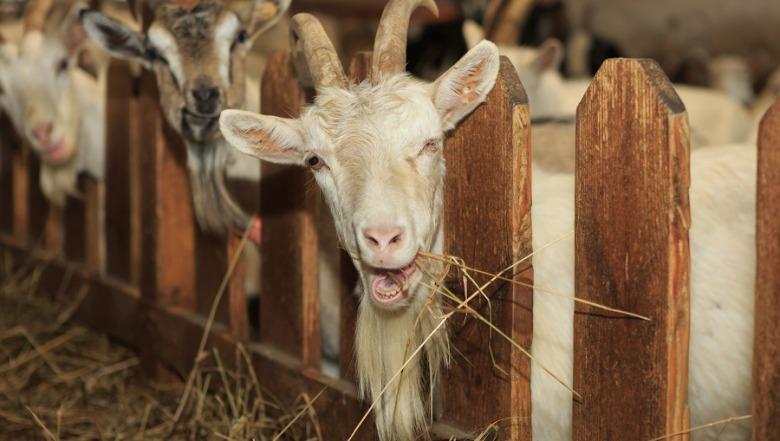 212 фермерських господарств отримають 65 млн гривень