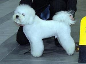 У Києві зібралися 4 тисячі гламурних собак
