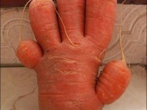 Американський фермер виростив чудернацькі овочі