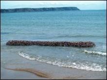 У Британії на берег викинуло колоду з 2000 щупалець
