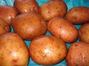 Школи Луцького району заготовили 17 655 кілограмів картоплі