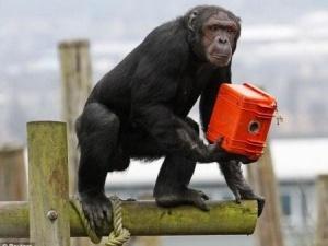 Мавпи зняли фільм для BBC