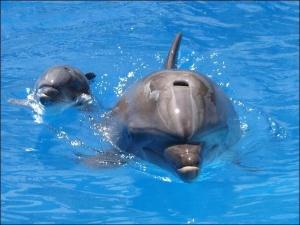 Дельфіненя народилося посеред вистави