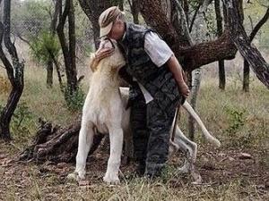 Жінка два тижні житиме у лігві левів