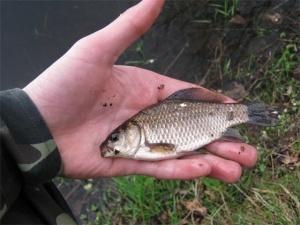 Куди поділася риба з волинських ставків?