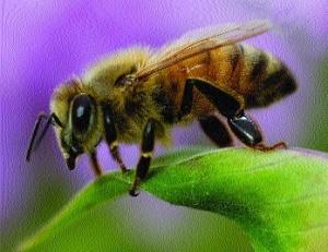Бджоли зірвали футбольний матч