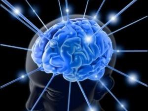 Декілька цікавих фактів про наш мозок