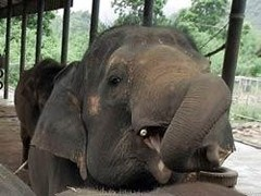 Слон-гей став знаменитістю польського зоопарку