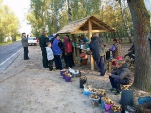 Дев'ятеро волинян отруїлися грибами з початку сезону