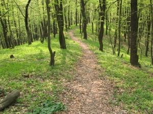 У Рожищі виявлено незаконну вирубку лісу