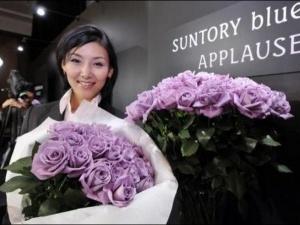 Японці виростили блакитні троянди