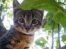 Вчені з'ясували, хто в котів правша, а хто – лівша
