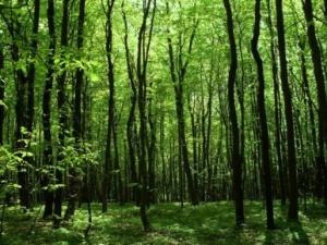Волинських лісівників відзначили за досягнення в галузі охорони довкілля