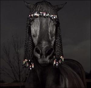 Коням наростили волосся для зачісок