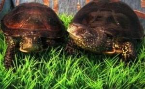 У Київському зоопарку буде свято - День Черепахи