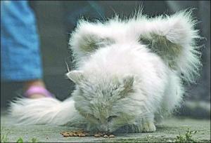 У кішки виросли крила