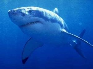 Австралійка голими руками відбилася від акули