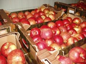 Наші яблука «з'їдає» конкуренція