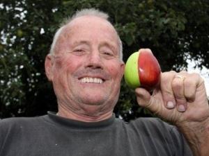 Британський фермер виростив двокольорове яблуко-мутант